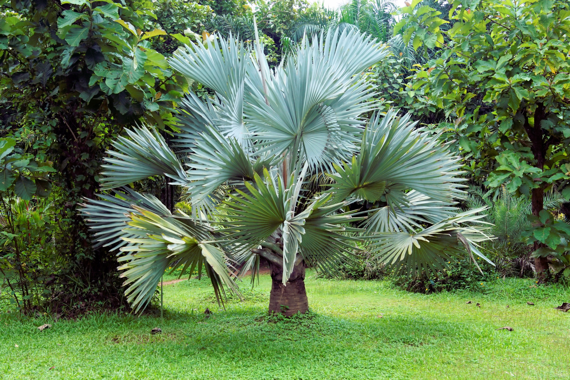 Palms Cultivating Rare Palm Trees